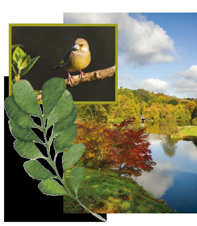 Woodland-Glade