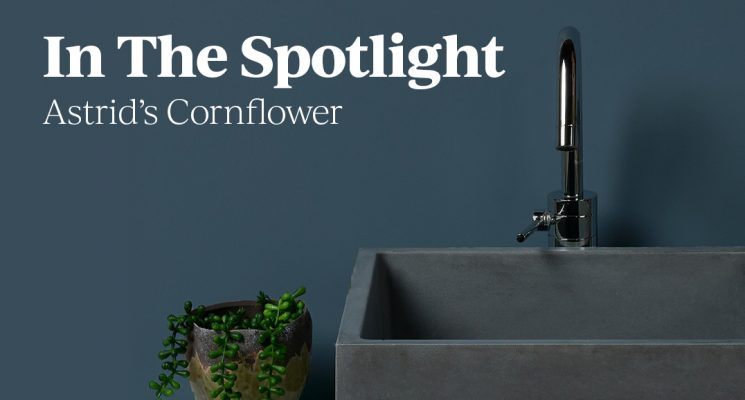 In the Spotlight : Astrid's Cornflower
